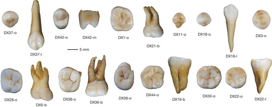 Selección de dientes humanos de Daoxian